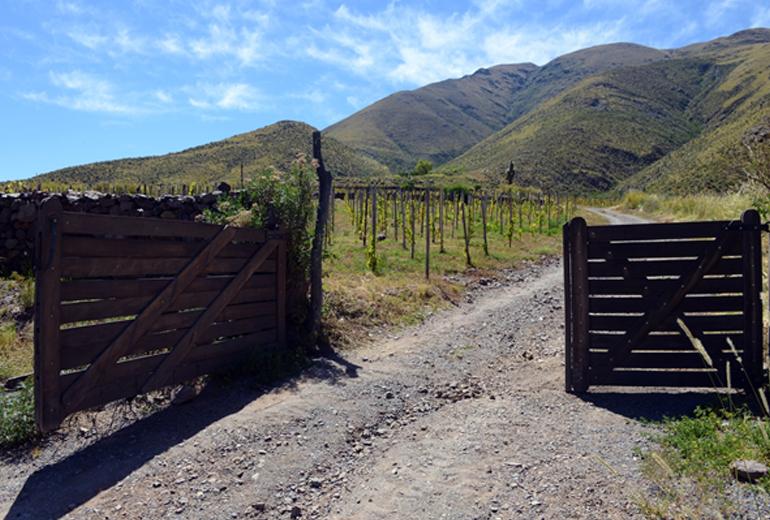 Top 3 Argentina Wine Regions