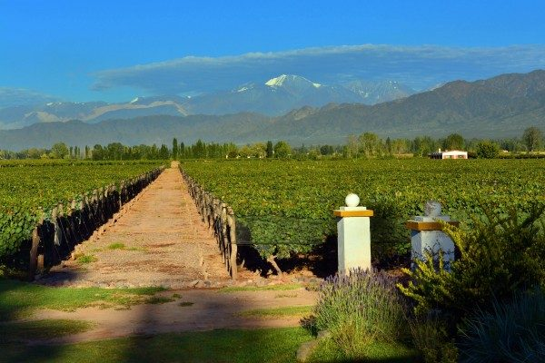 1-Majectic Vineyards-min