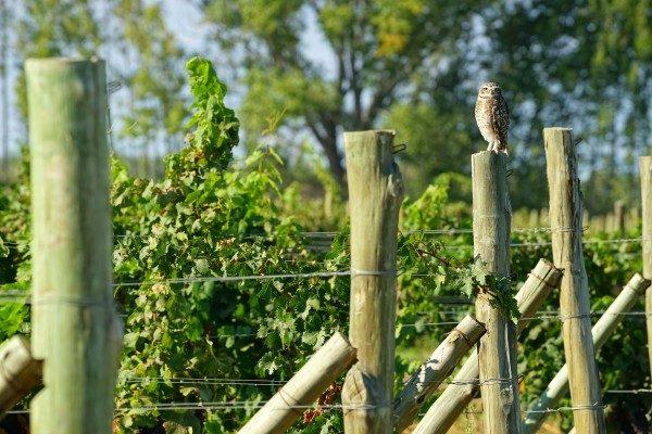 3-Vineyard Security-min
