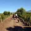 4-A-Ride-Through-The-Vineyards-min