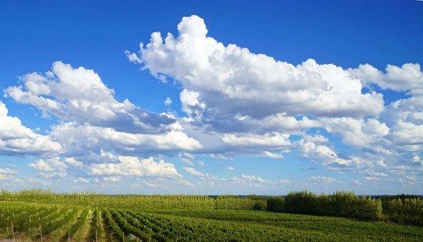 6-Vineyard Under The Sky-min